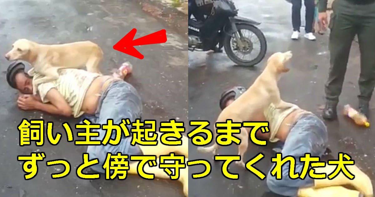 1 174.jpg?resize=1200,630 - 酔っぱらって道で寝込んだ飼い主を見守る犬(映像)