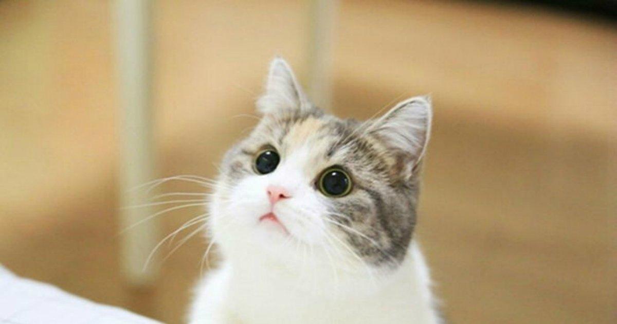 """1 180.jpg?resize=300,169 - 카톡 프로필 사진 '고양이'로 해놨더니 """"애들 사진으로 바꿔라"""" 명령한 시어머니"""