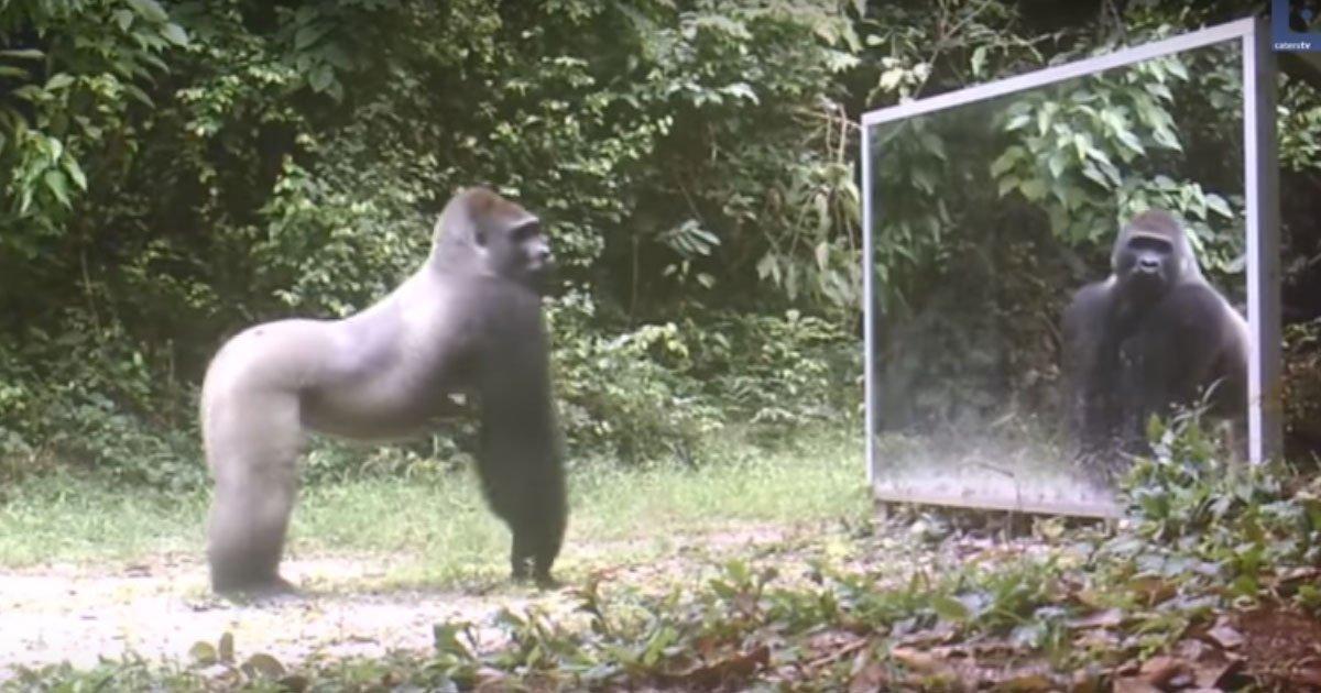 1 291.jpg?resize=1200,630 - Découvrez les réactions hilarantes d'animaux découvrant leur propre reflet dans le miroir.