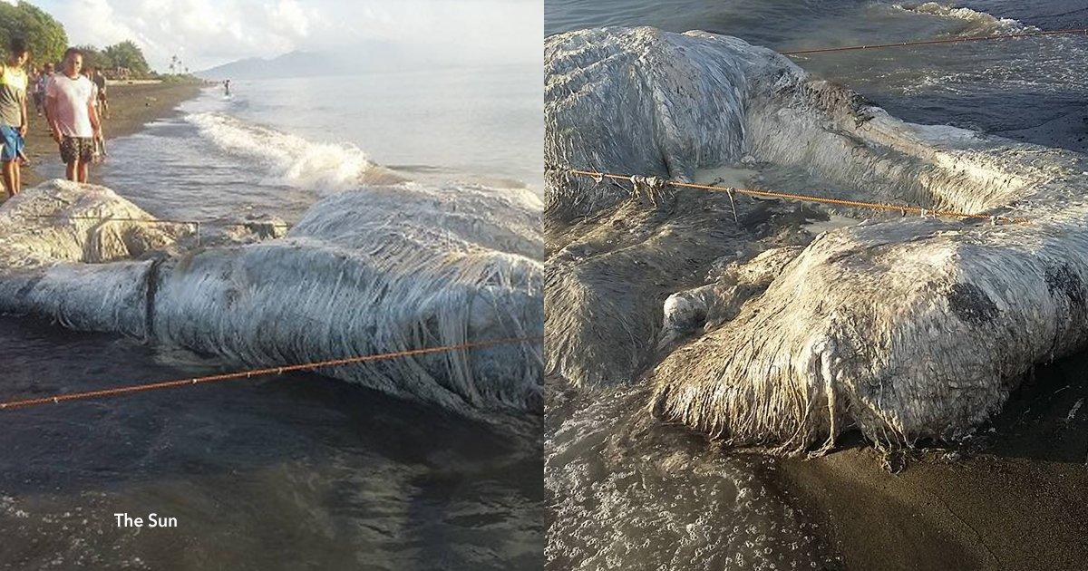 1 cov 1.jpg?resize=300,169 - En las orillas de Filipinas apareció una extraña criatura y temen que ahora llegue el apocalipsis