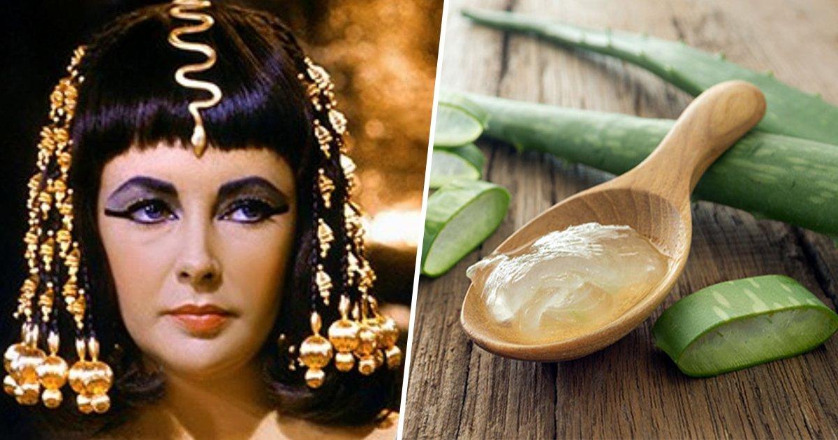 """11ec8db8eb84ac.jpg?resize=1200,630 - Les anciens égyptiens l'appelaient """"la plante de l'immortalité"""", voici tous les bienfaits de l'Aloé Vera!"""
