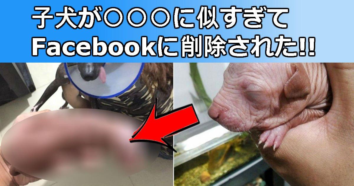 2 234.jpg?resize=1200,630 - 子犬の画像がFacebookから強制削除された理由は?あれっ何かに似てる…