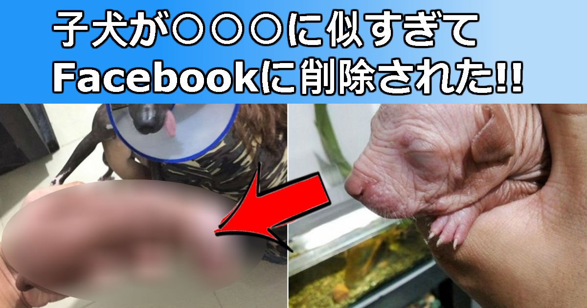 2 234.jpg?resize=300,169 - 子犬の画像がFacebookから強制削除された理由は?あれっ何かに似てる…