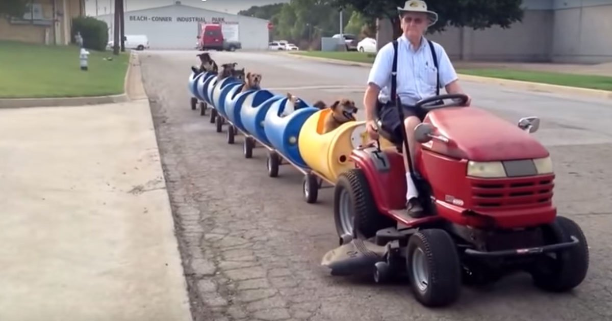 2 77.jpg?resize=648,365 - Man Drives Train Around Streets With Rescued Pups In The Passenger Seats