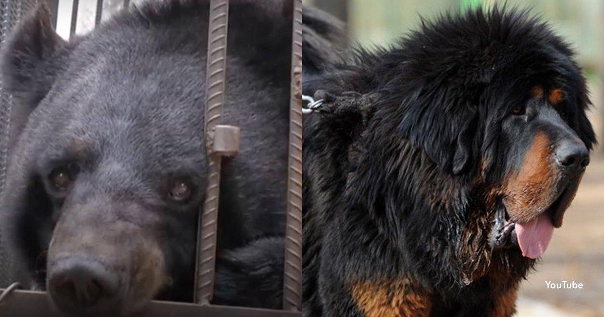 2 cover 2.jpg?resize=648,365 - Esta familia crió durante años a un perro pero en realidad era un oso