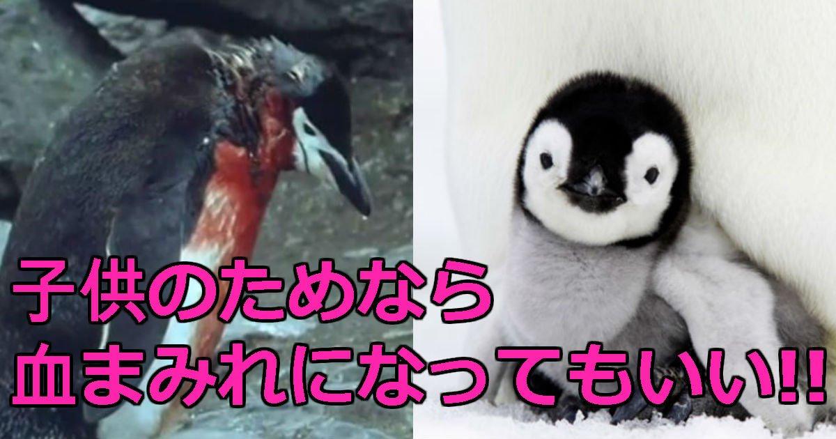 222.jpg?resize=1200,630 - 「血まみれ」でも子どもにご飯をあげるために最後まで生きて帰ってきた「お母さんペンギン」