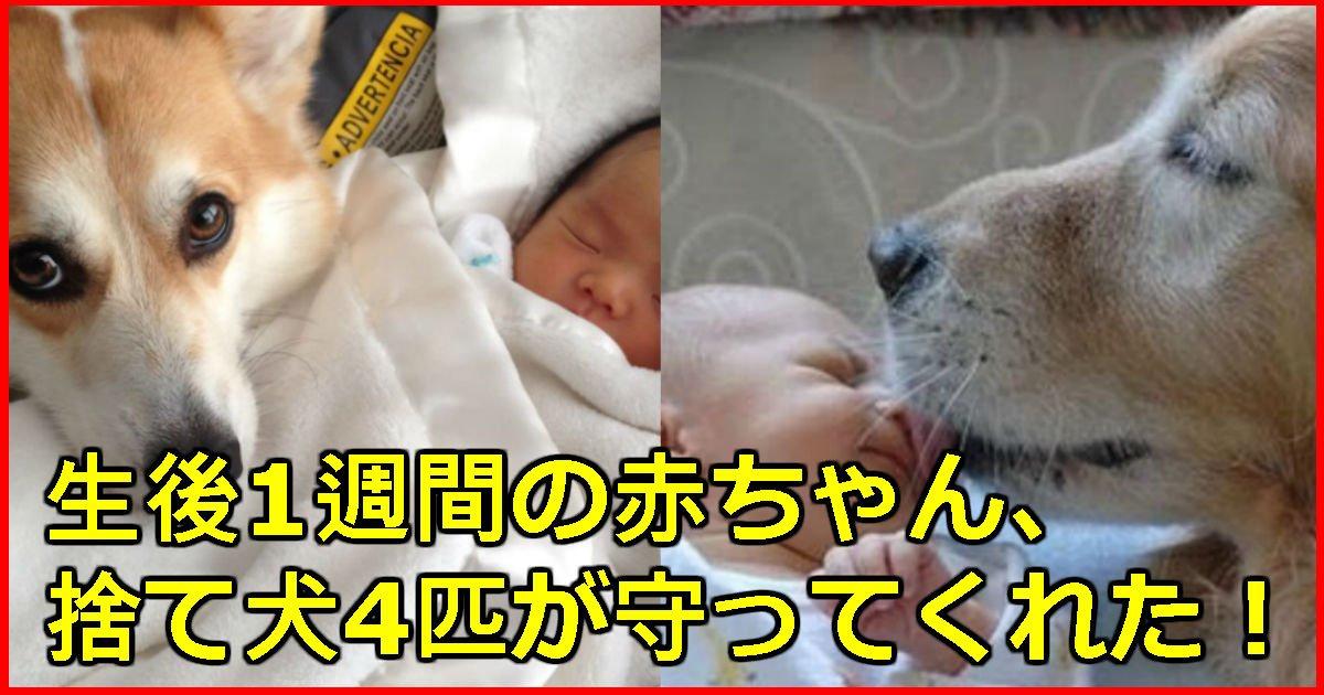4 15.jpg?resize=1200,630 - 森の中に捨てられた生後7日の赤ん坊を生かした「4匹の捨て犬」