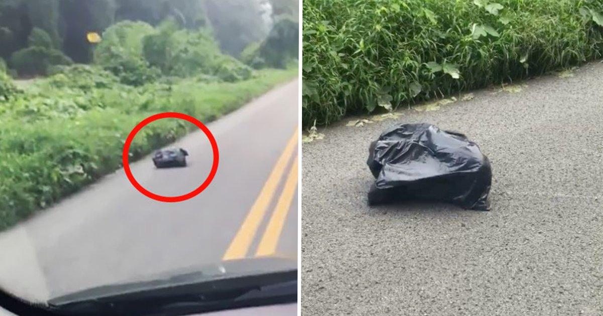5ec8db8eb84ac ec9db8ec8aa4ed8ab8eba6bc.jpg?resize=300,169 - Une femme remarque un sac poubelle sur le côté de la route. Puis réalise qu'il se déplace