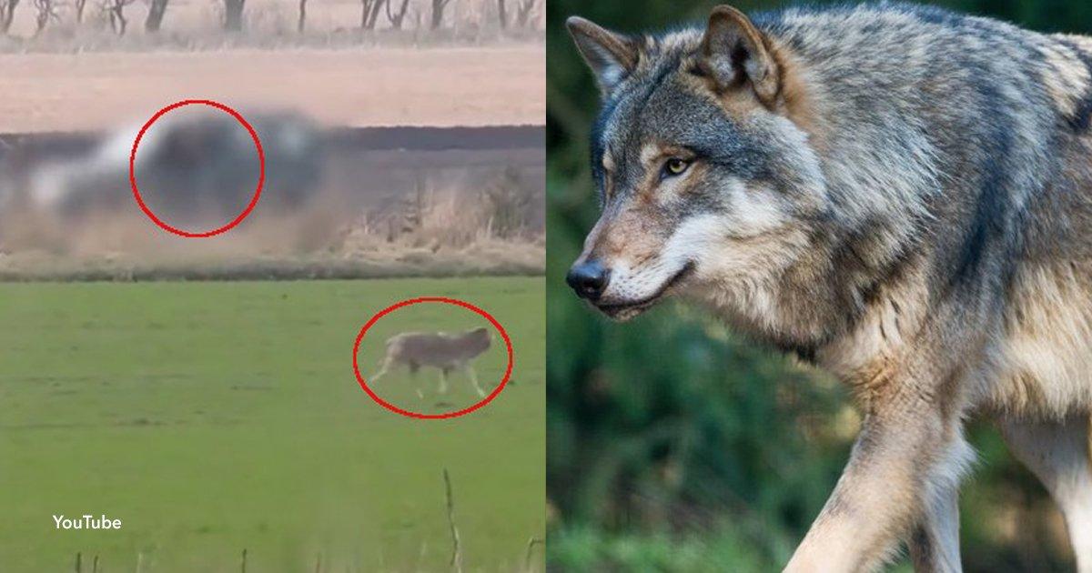 7 cover.jpg?resize=1200,630 - Indignante: Un cazador mató a la última loba salvaje de Dinamarca
