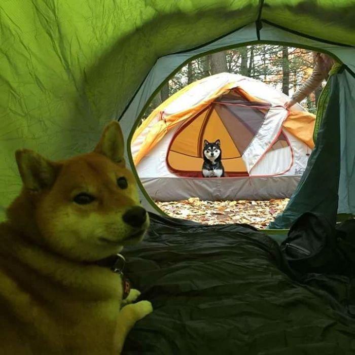 Copains de camping