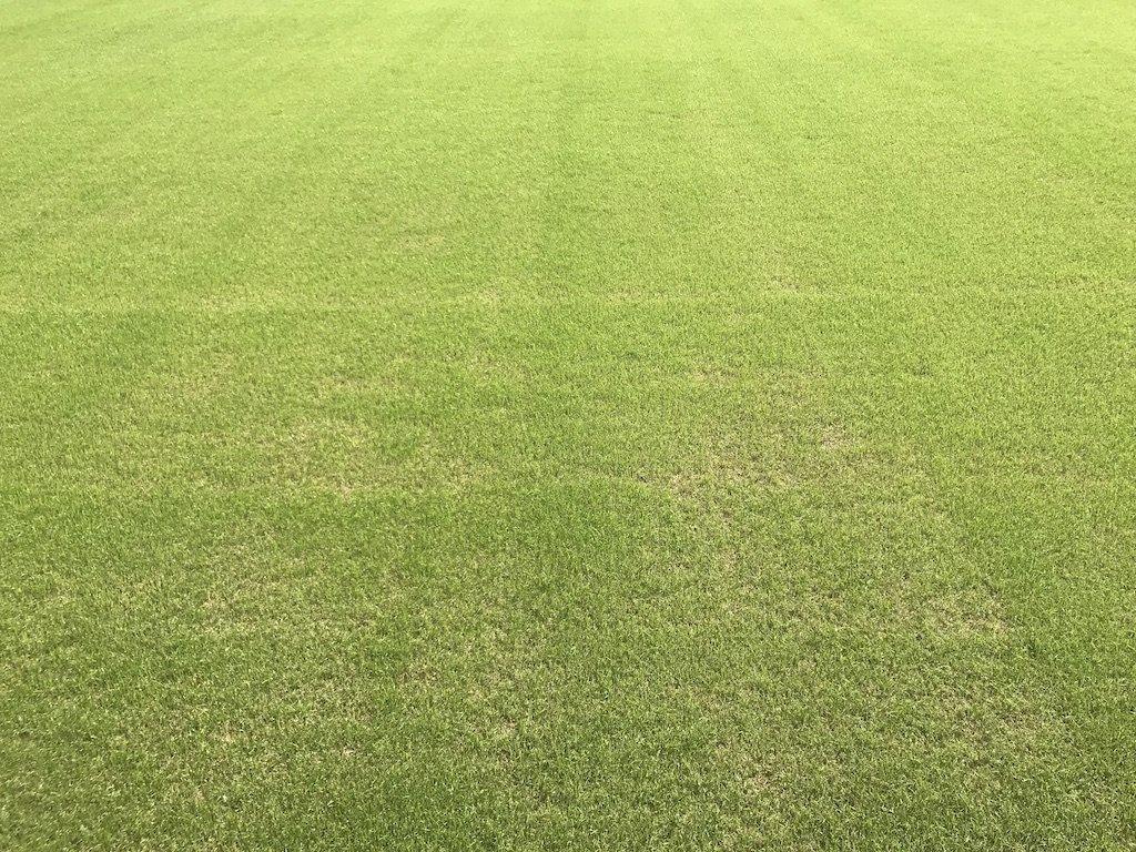 「芝生」の画像検索結果