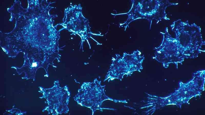 culture de cellules cancéreuses