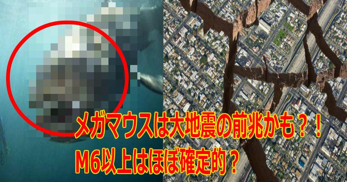 a 15.jpg?resize=1200,630 - 7月下旬までに【M6以上】は確定的か、メガマウスは大地震の前兆かも?!