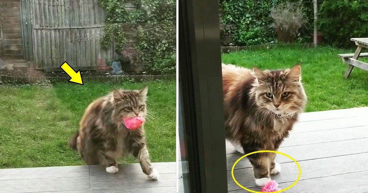 cat 1.jpg?resize=1200,630 - Elle ne s'attendait pas à ce que son mystérieux admirateur soit un mignon petit chat qui lui apporte des fleurs tous les jours