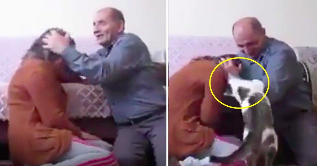 cat 2.jpg?resize=1200,630 - Une vidéo montre un courageux chat protégeant sa propriétaire alors que son mari l'attaque