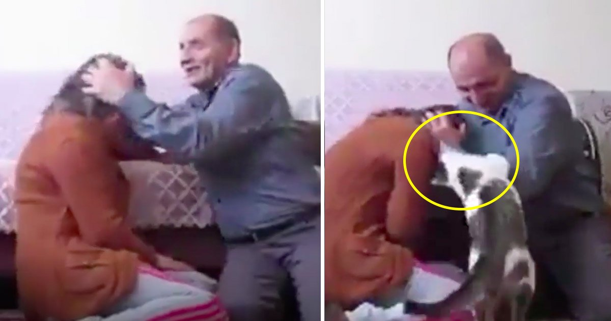 """cat 2.jpg?resize=636,358 - Vídeo fofo mostra gato valente protegendo sua dona, enquanto é """"atacada"""" pelo seu marido"""