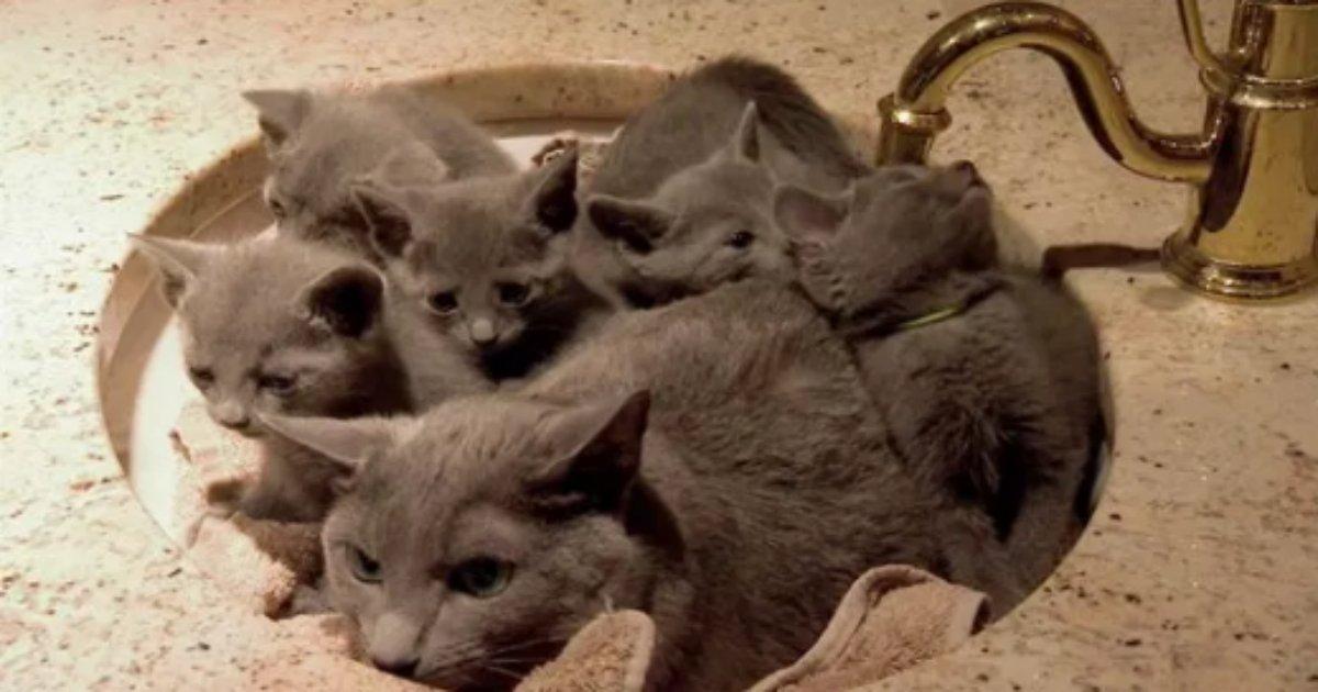 cat 3.png?resize=412,232 - 【癒し】色んな場所でくつろいで可愛すぎる猫まとめ