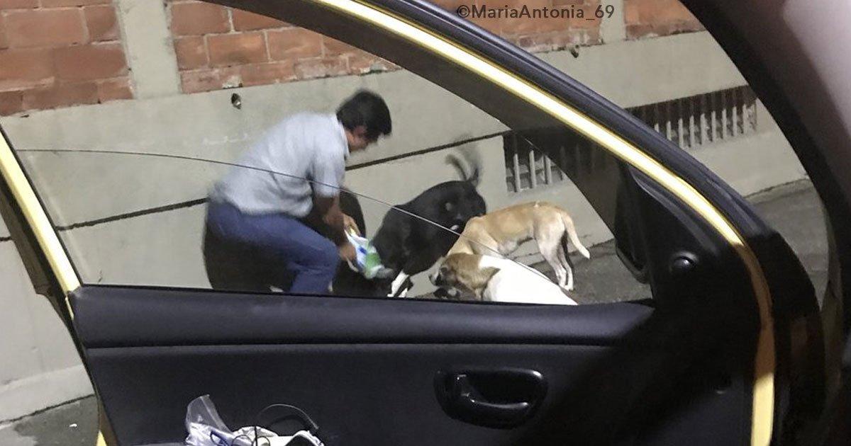 cover 13.jpg?resize=648,365 - Un gran gesto de bondad. Taxista se detiene para darle de comer a perros de la calle, la pasajera conmovida captó el momento