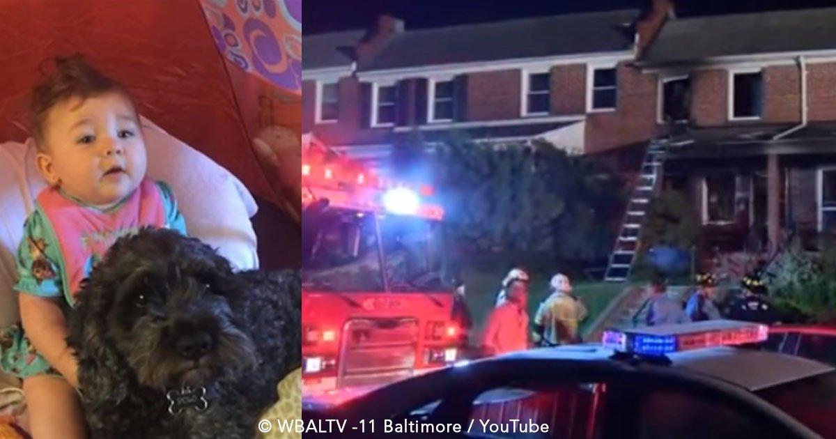 cover 24.jpg?resize=648,365 - Perro se convierte en héroe al entregar su vida para salvar a una bebita de un incendio