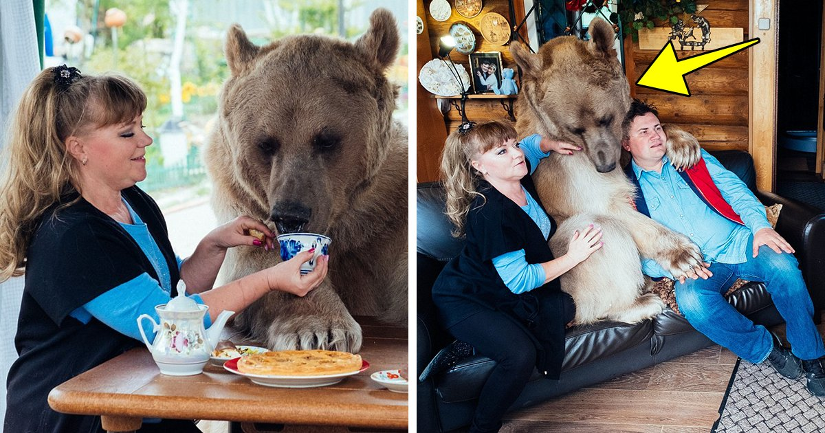 cub.png?resize=412,232 - Russian Couple Rescues Orphaned Bear Cub 23 Years Ago. This Is What He Is Doing At Their House Now