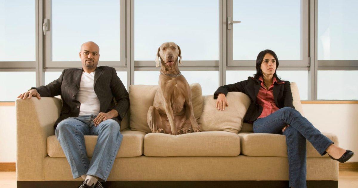dog family.png?resize=412,232 - Animais são membros da família, decide Tribunal de Justiça de São Paulo