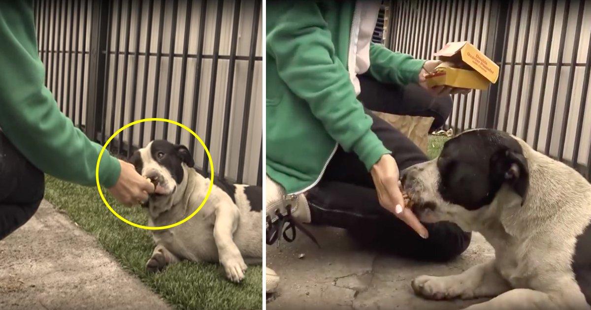 dogs 2.jpg?resize=636,358 - Des chiens adorables ont été jetés dans les rues, mais quand les sauveteurs arrivent, leur réaction inhabituelle est trop mignonne!