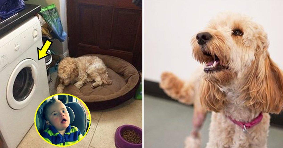 dogsaves.jpg?resize=648,365 - Un chien sauve la vie d'un petit garçon souffrant de trisomie 21.