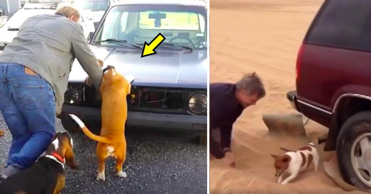 dogsss.jpg?resize=1200,630 - Ces chiens sont de bien meilleurs assistants que les humains. Quand vous verrez ce qu'ils font, vous n'en reviendrez pas !