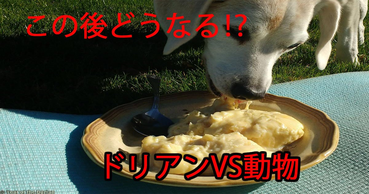 doriandoubutu.jpg?resize=1200,630 - 【爆笑】ドリアンVS動物!ドリアンのにおいを嗅いだ動物の反応が可愛い!