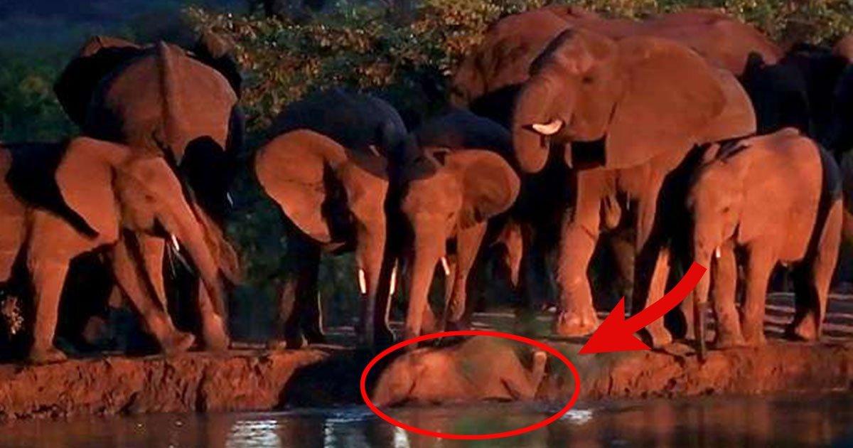 e.jpg?resize=1200,630 - Un groupe d'éléphants sauve un petit éléphant de la noyade dans une rivière