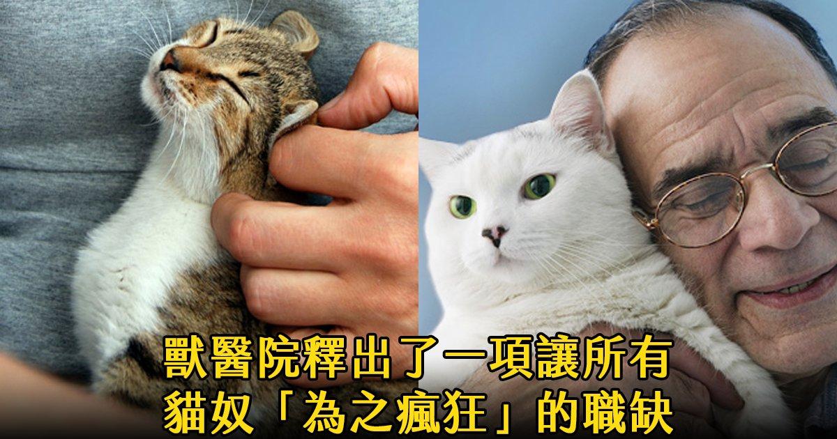 e69caae591bde5908d 1 2.png?resize=1200,630 - 獸醫診所招募「貓咪抱抱專員」小編明天提辭呈立馬去應徵!
