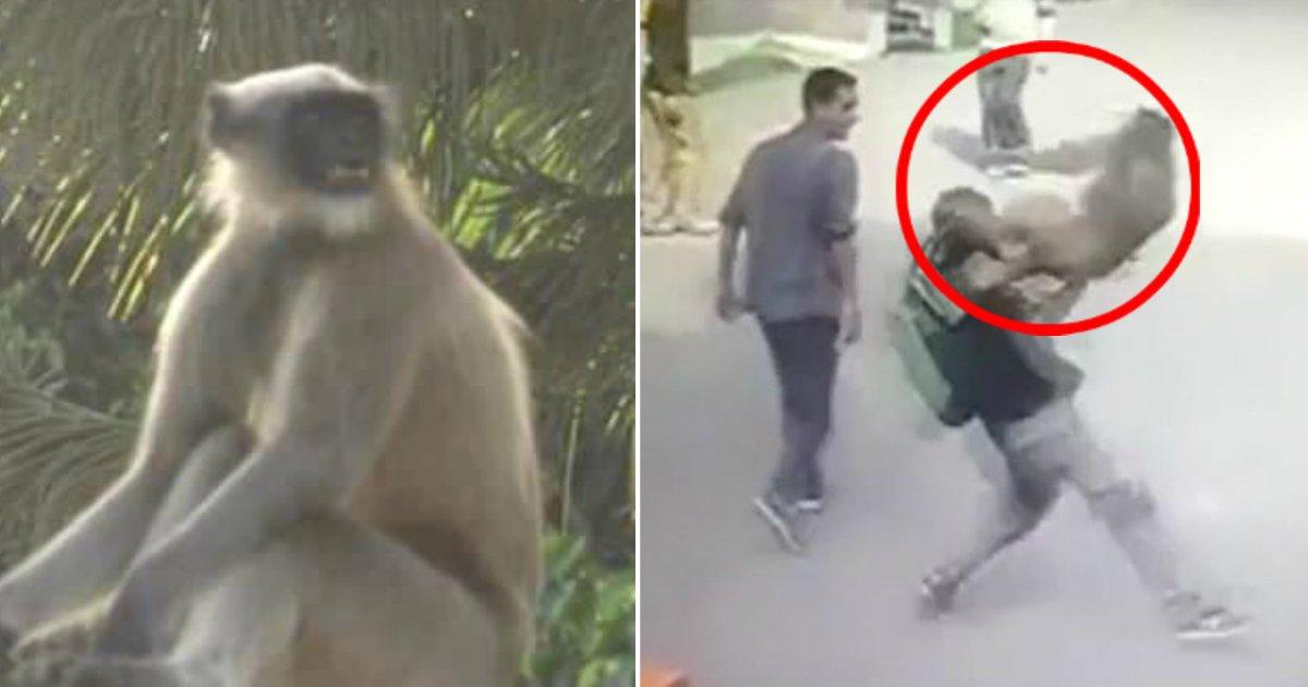 ec9b90ec88ad.jpg?resize=300,169 - '악랄한' 원숭이들의 무차별 공격으로 '공포'에 떠는 마을 사람들 (영상)