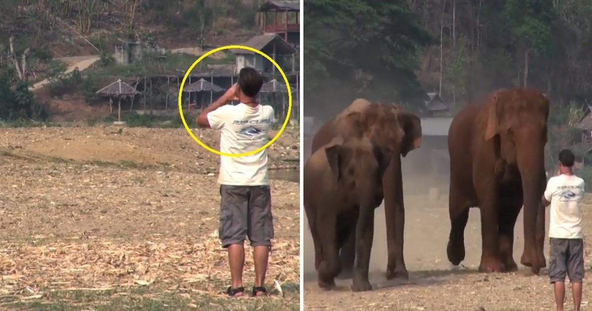 elephant.jpg?resize=300,169 - Man Shouted Two Words And Elephants Came Running Toward Him
