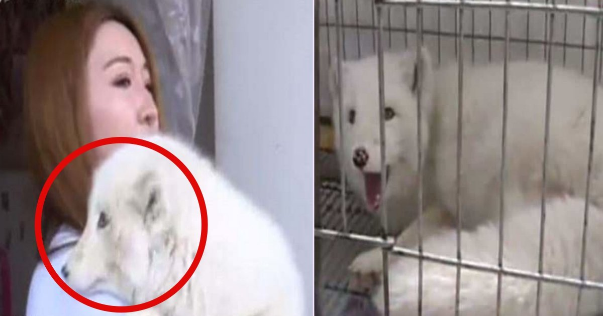 f side.jpg?resize=1200,630 - Chinese Woman Shocked To Discover The 'Pet Dog' Which She Bought At £140 Is Actually A Fox