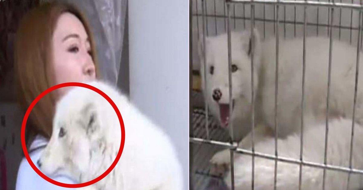 f side.jpg?resize=412,232 - Une femme chinoise a été choquée de découvrir que son chien était en réalité un renard.