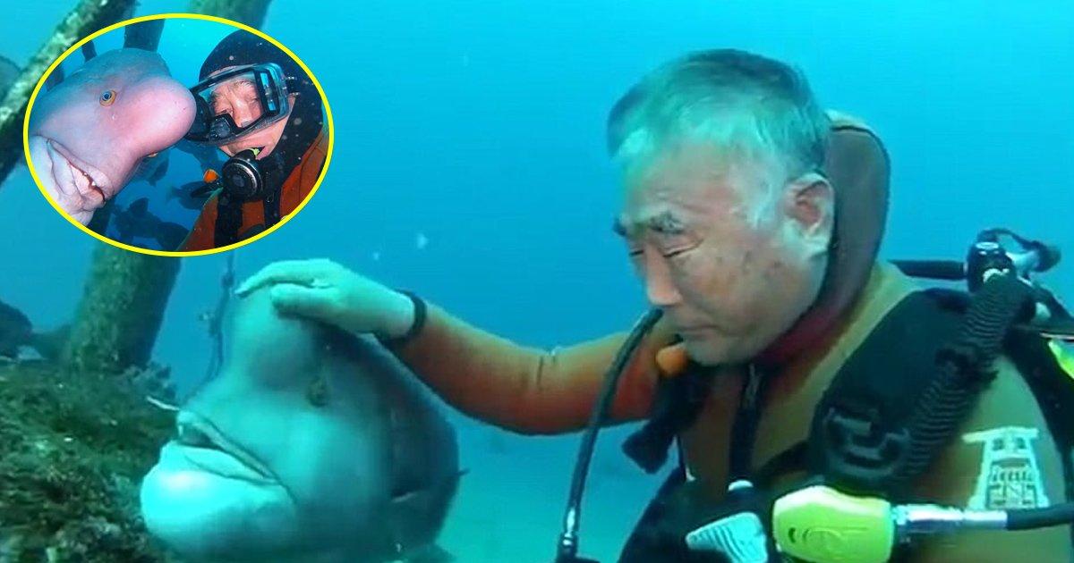fish 6.jpg?resize=412,232 - Esta interação subaquática entre um humano e um peixe vai te surpreender