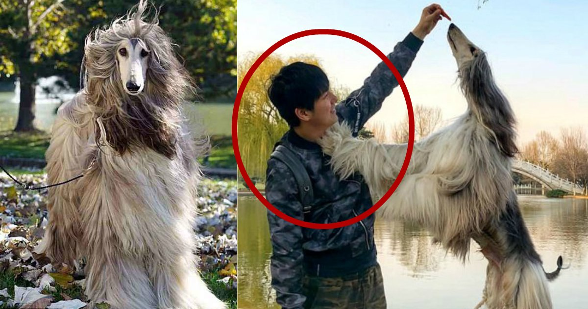 fortune grooming.jpg?resize=412,232 - Man Spends Fortune Just To Groom His Dog, Is This Worth It?