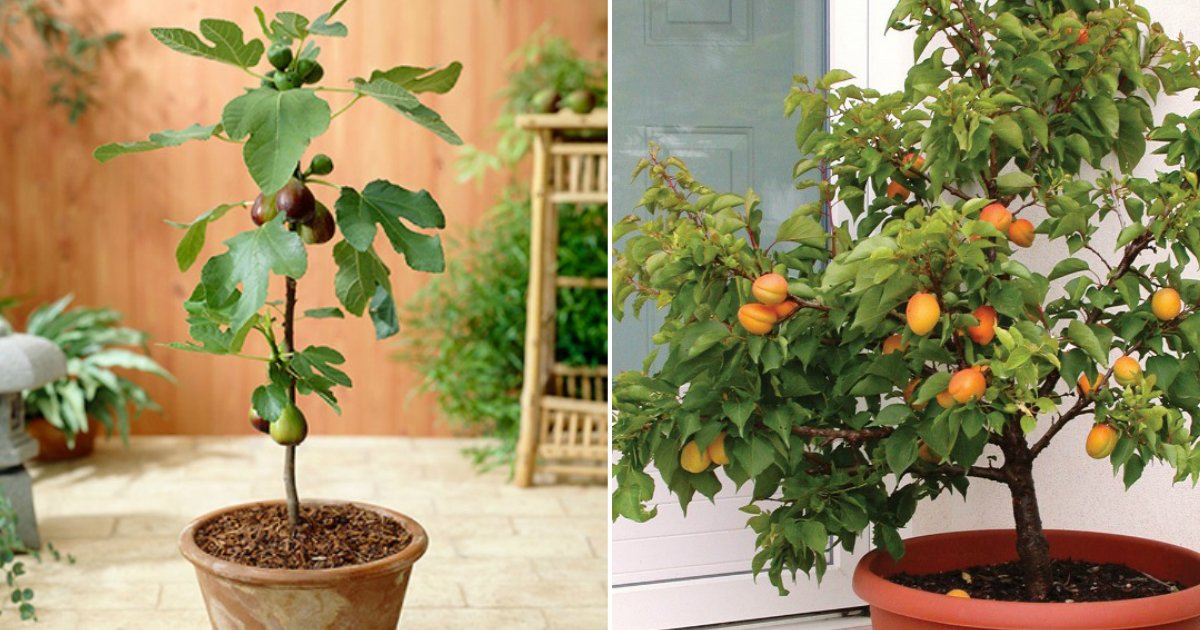 fruits at home.jpg?resize=412,232 - Don't Buy! Here Are 7 Delicious Fruits You Can Easily Grow At Home