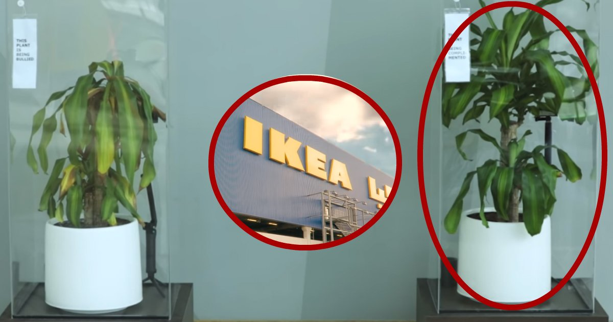 ikea plant.jpg?resize=300,169 - IKEA Asked People To Bully A Plant For 1 Month, Here Is The Result
