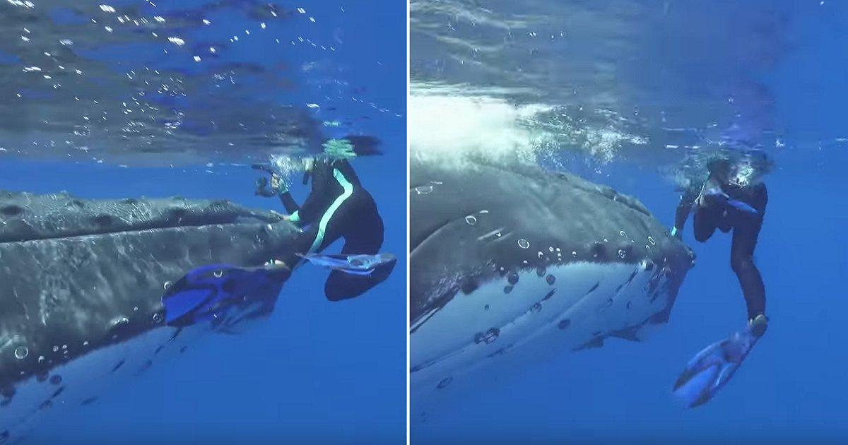 img 5b015358af52a.png?resize=412,232 - 스노클링 중 가까이 다가오며 '위협'하던 고래의 정체 (영상)