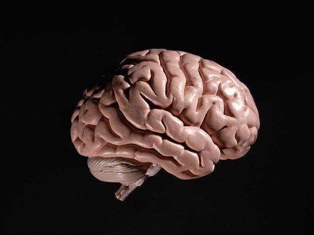 ゲーム脳 海馬에 대한 이미지 검색결과
