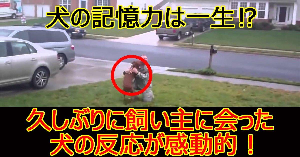 inunokiokuryokuy.jpg?resize=300,169 - 【感動】派兵から帰った飼い主を見た犬の反応