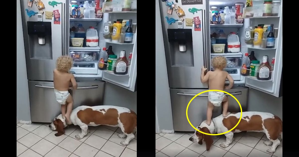 kid and dog.jpg?resize=300,169 - This Adorable Toddler and Dog 'Partners-in-Crime' Duo Raiding Fridge for Food is Internet's New Favorite