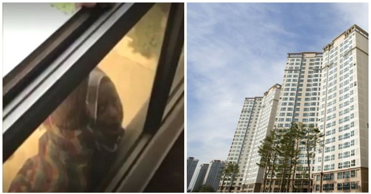 layout 2018 5 7 2.jpg?resize=412,232 - 위험에 처한 가정부를 도와주지 않고 '동영상 촬영'만 한 집주인 (영상)