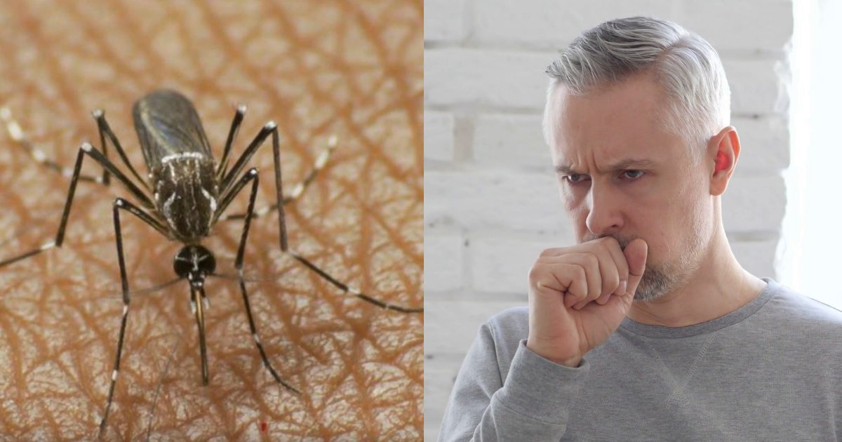 mos.jpg?resize=648,365 - Scientists Warn Tropical Dengue Fever Might Spread Through Sex