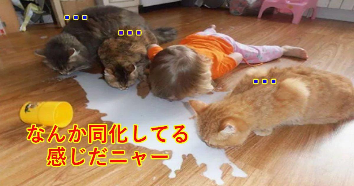 neko.png?resize=412,232 - ペットと子供だけにしてはいけないと実感する写真まとめ、仲がいいのは大いに結構だけど…
