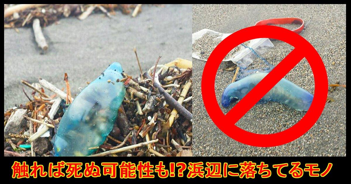 "shasin ttl.jpg?resize=1200,630 - 【超危険!】砂浜に""コレ""があったら絶対触らないで!!!"