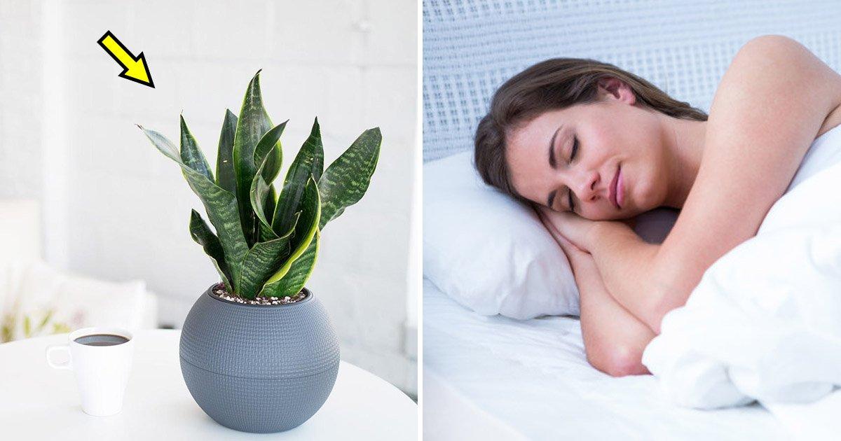 sleep 2.jpg?resize=648,365 - 9 Bedroom Plants That Help You Sleep Better Every Night