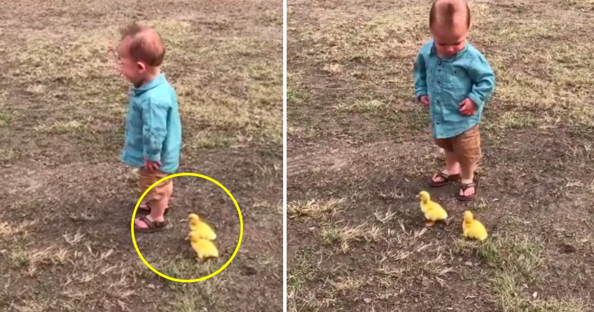 stalker.jpg?resize=300,169 - A reação deste bebê sendo perseguido por patinhos irá garantir o seu dia