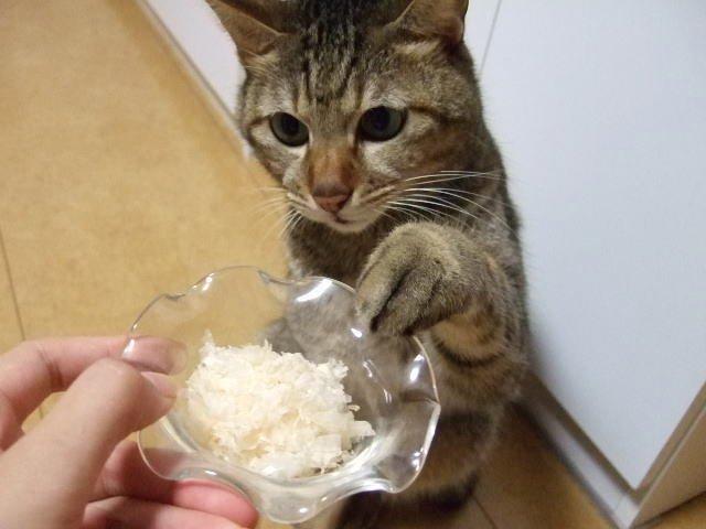 「猫 利き手」の画像検索結果